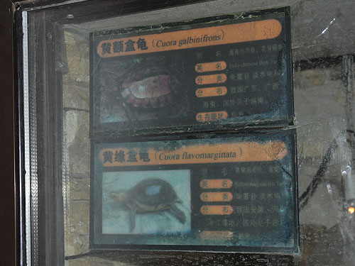 Beijing Zoo Signage by category Animals: Indochinese box