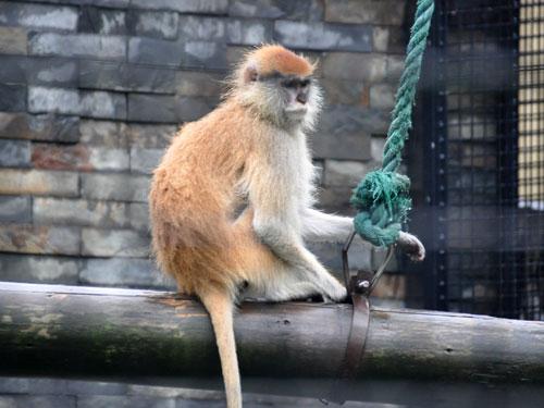 The Animals At Shanghai Zoo In Shanghai China