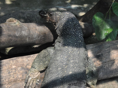 Large-scaled water monitor