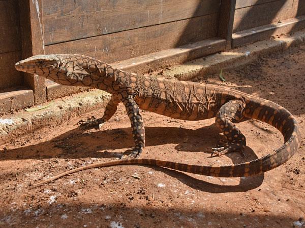 http://zooinstitutes.com/img/animals/91/911549361091_2.jpg