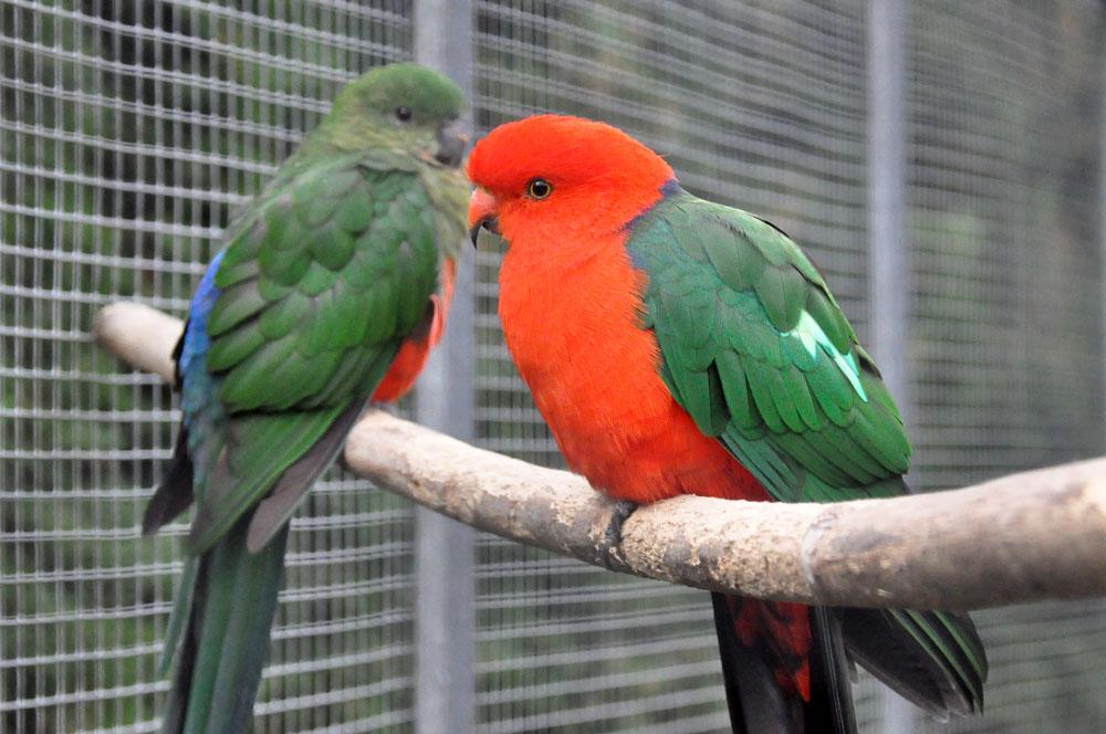 vogelpark ruinen
