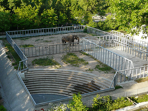 <span>Elephas maximus / Asiatic elephant</span><br>